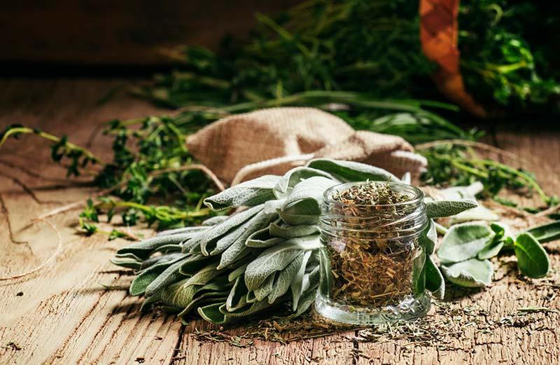 Salbei trocknen und haltbar machen – Von der Ernte bis zum Gewürz