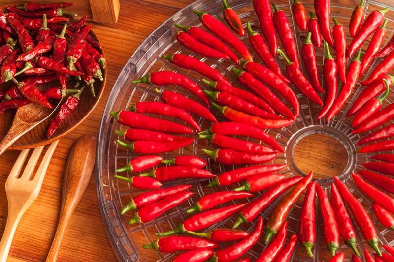 Ganz und zu Extrem Chili trocknen - Anleitung und Tipps wie Sie Chilis haltbar machen &EA_78