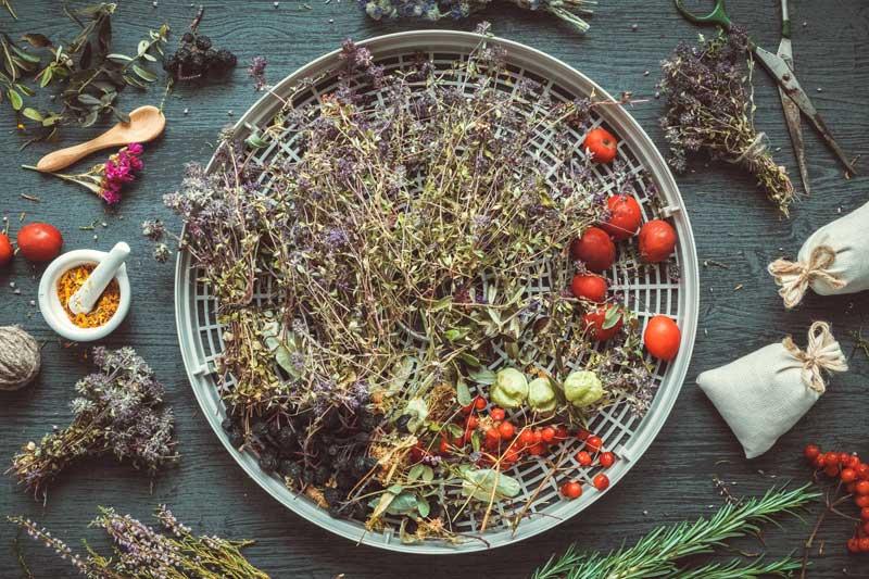 Kräuter und Gemüse auf dem Dörrgitter eines Dörrautomaten