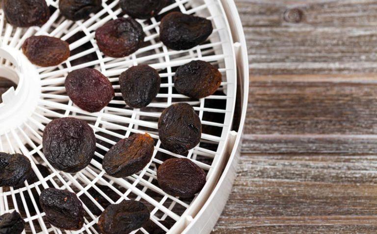 Getrocknete Aprikosen auf einem Dörrgitter