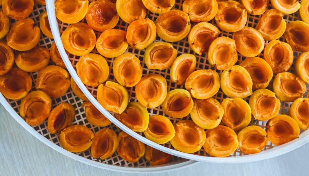 Aprikosen Trocknen mit dem Dörrautomaten