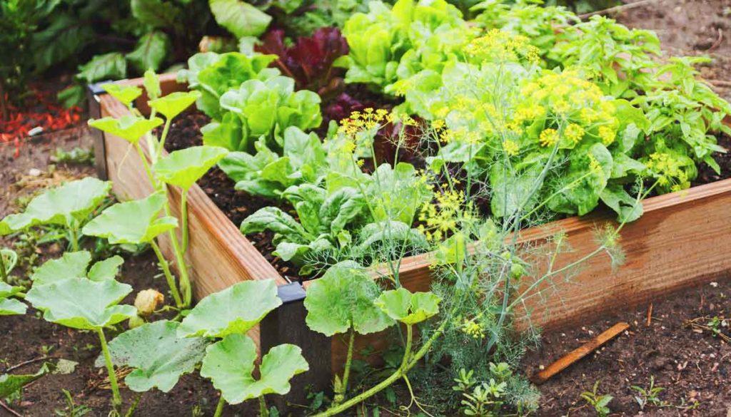 Gesunde ausgewogene Ernährung und Nachhaltigkeit